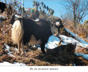 Бутан_04